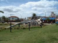Whalebne